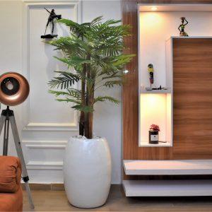 Coconut Pot and Tropica Plant